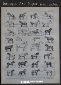 FRANCE antique ART PAPER フランスアンティーク 辞書・図鑑の1ページ [馬] 描画 アンティークアート 1900's